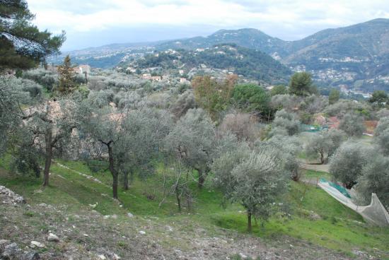 Domaine Lessatini - Oliveraie