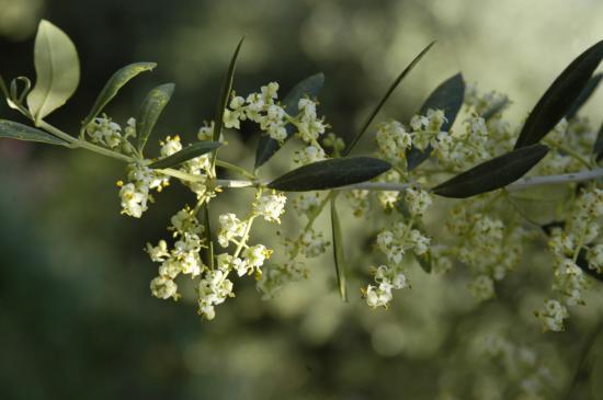 Floraison Juin2010